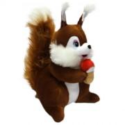 Squirrel (M)