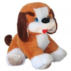 Dog Butuz (L)N
