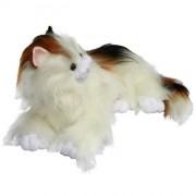 Cat Dashka (M)