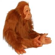 Orangutan (L)